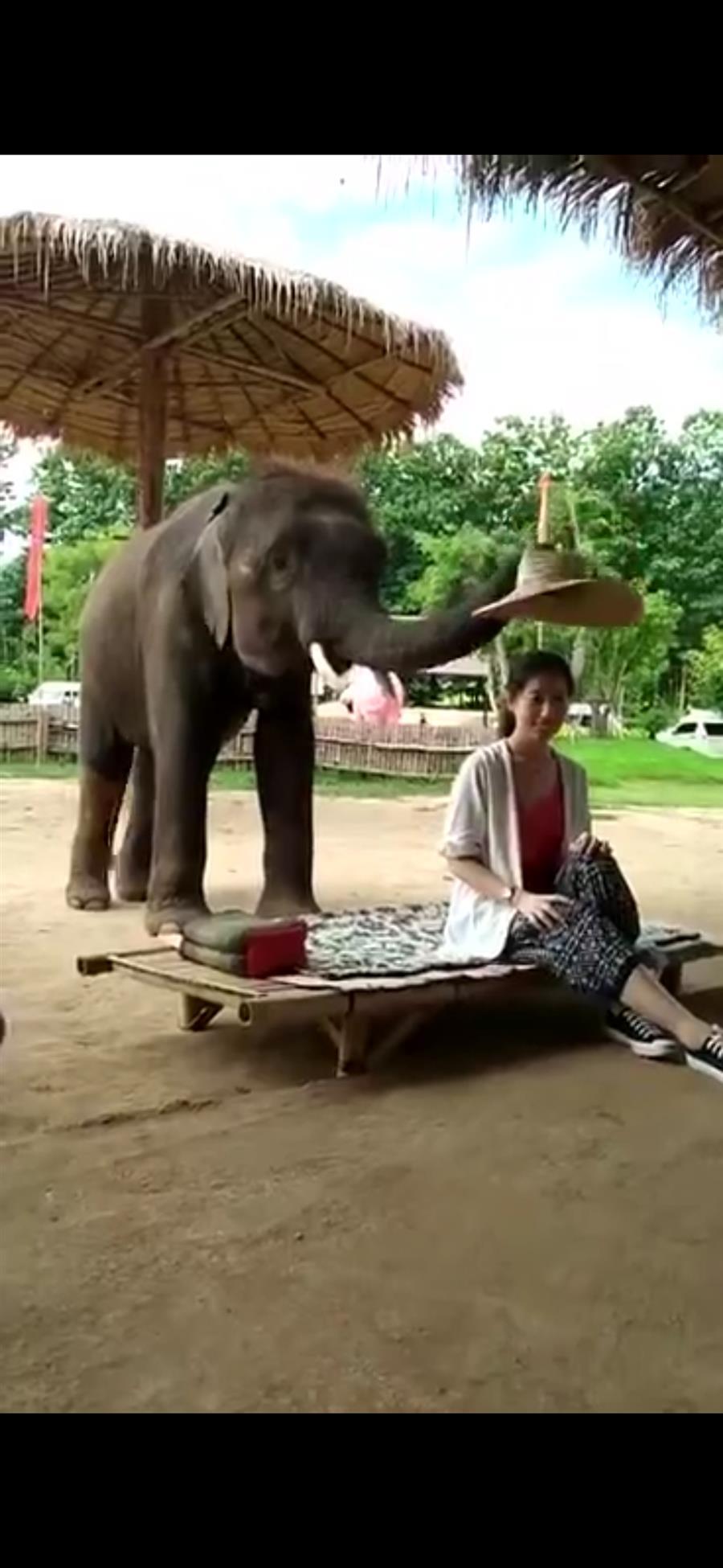大象戴草帽2.jpg